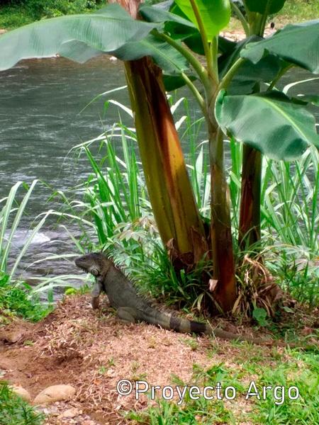 12. Río Srapiquí (Costa Rica)