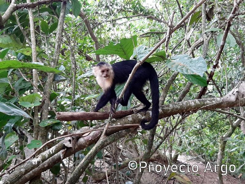 21. Parque Nacional Cahuita (Costa Rica)